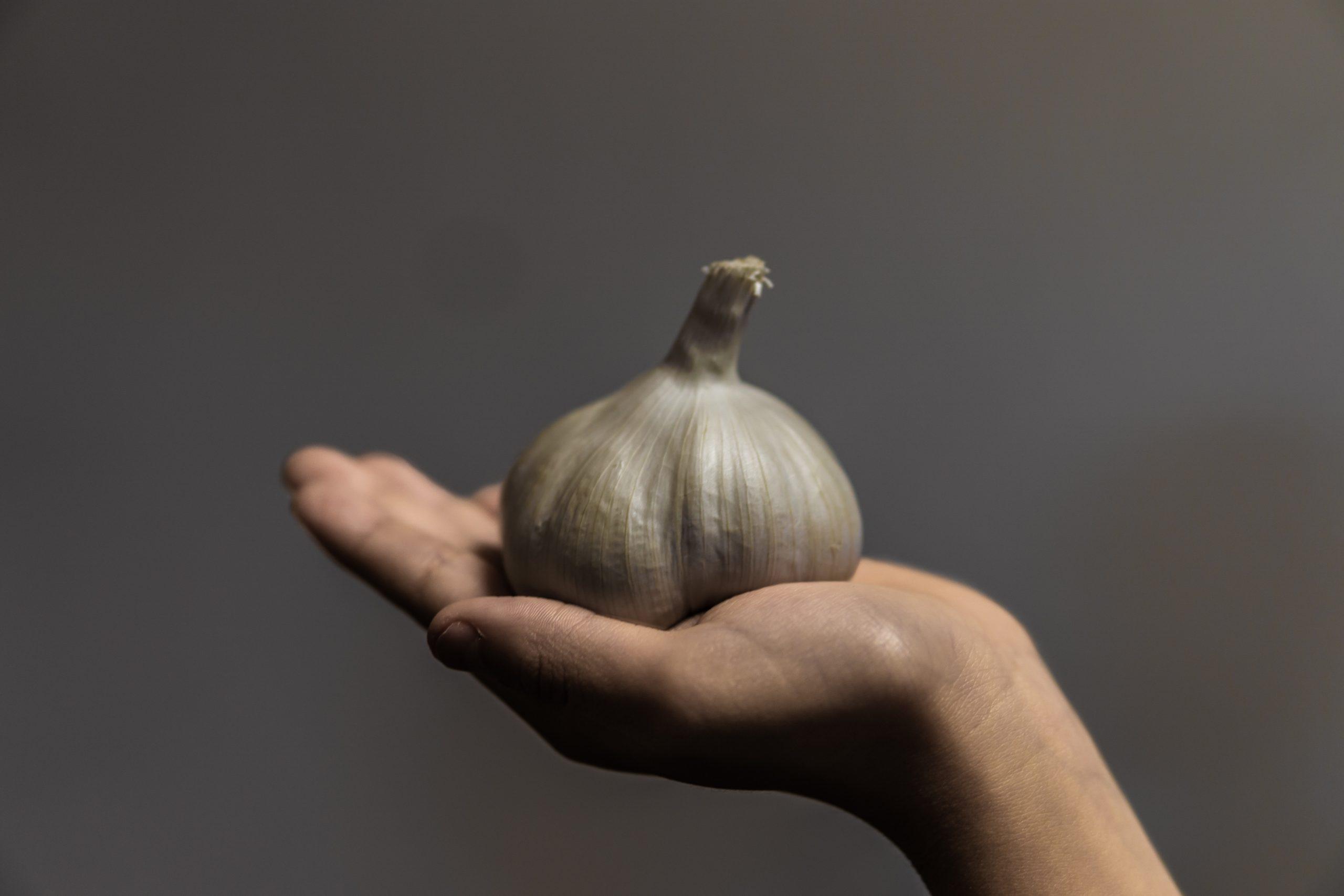Česnek v dlani