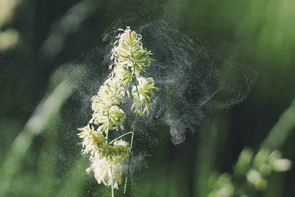 pyl trávy